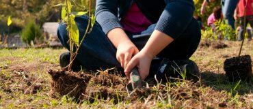 student participates in garden planting