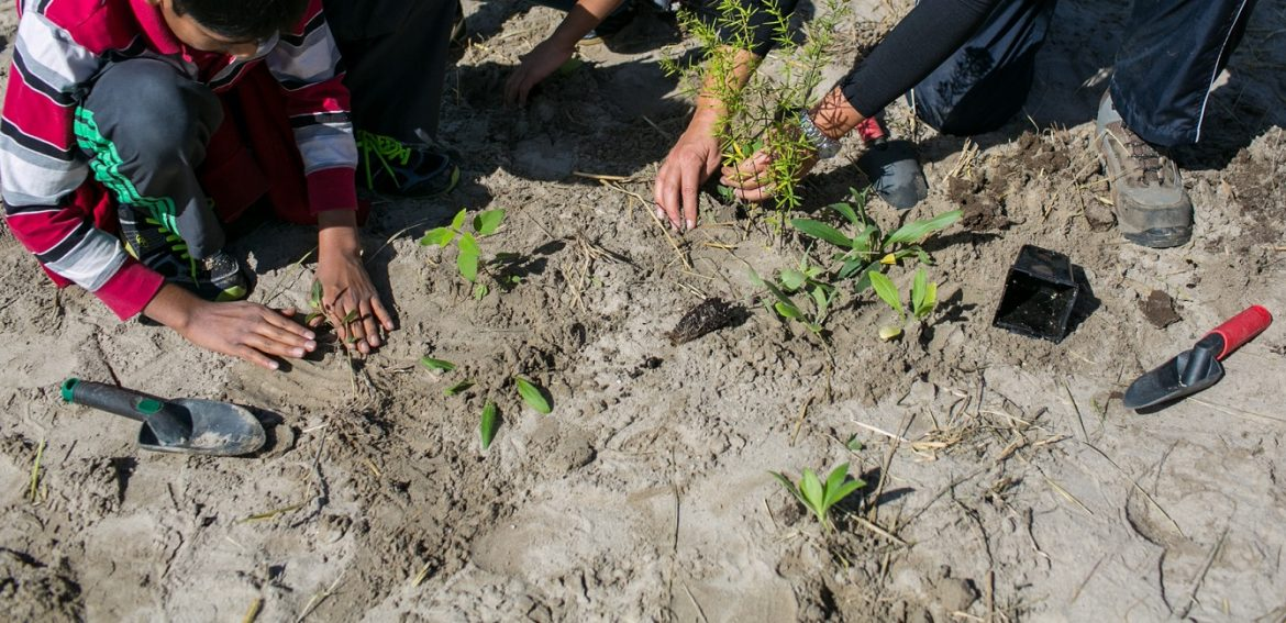 students take part in planting event